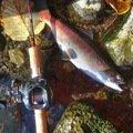 釣りバカさんの北海道網走郡での釣果写真