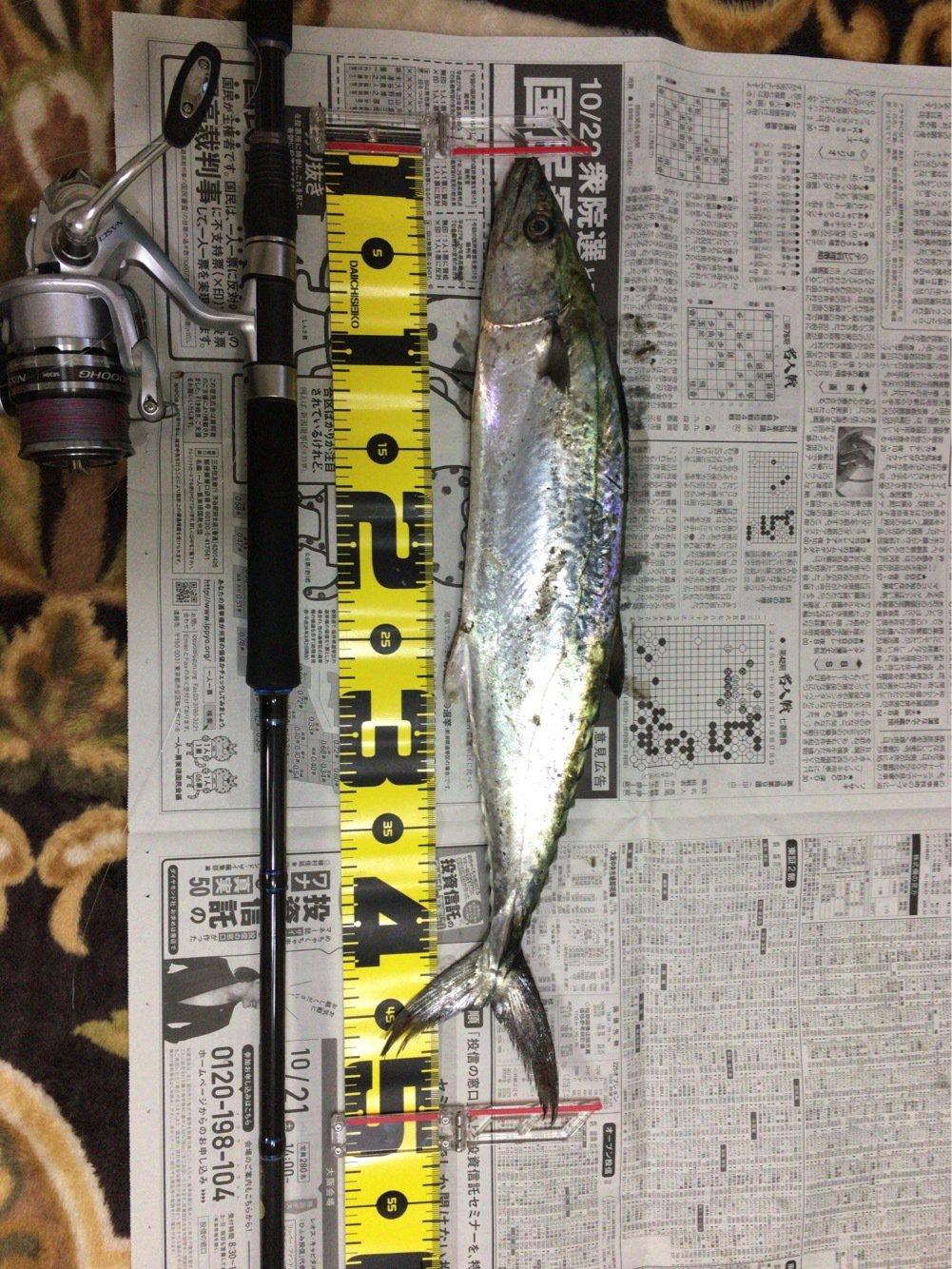 ゆうゆうさんの投稿画像,写っている魚はサワラ