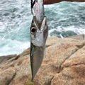 ジグ太郎さんの広島県山県郡での釣果写真