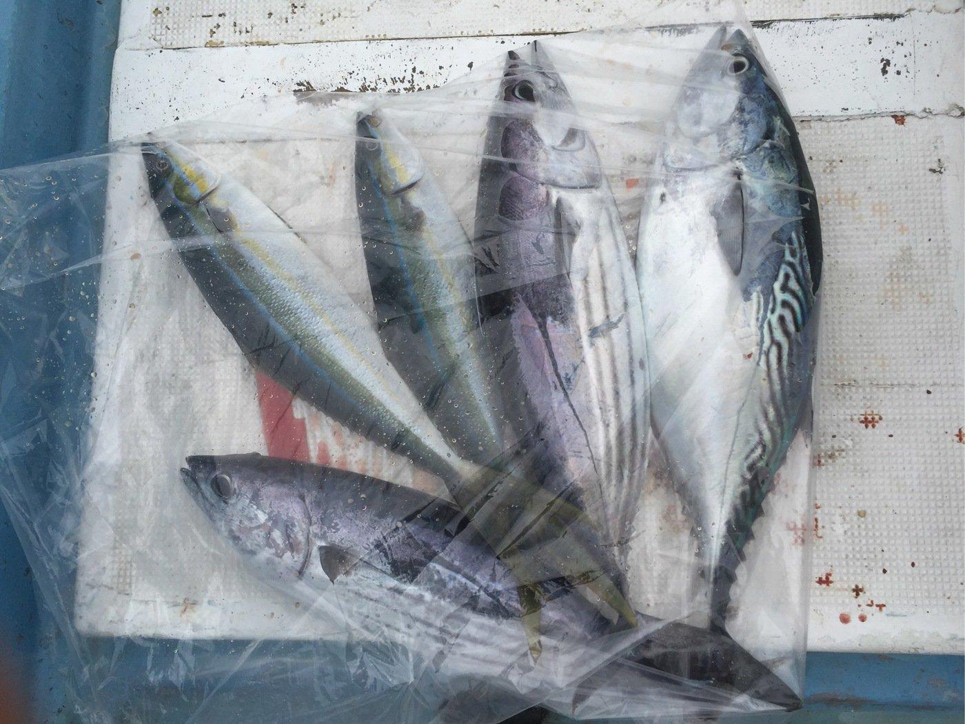 smile21さんの投稿画像,写っている魚はカツオ