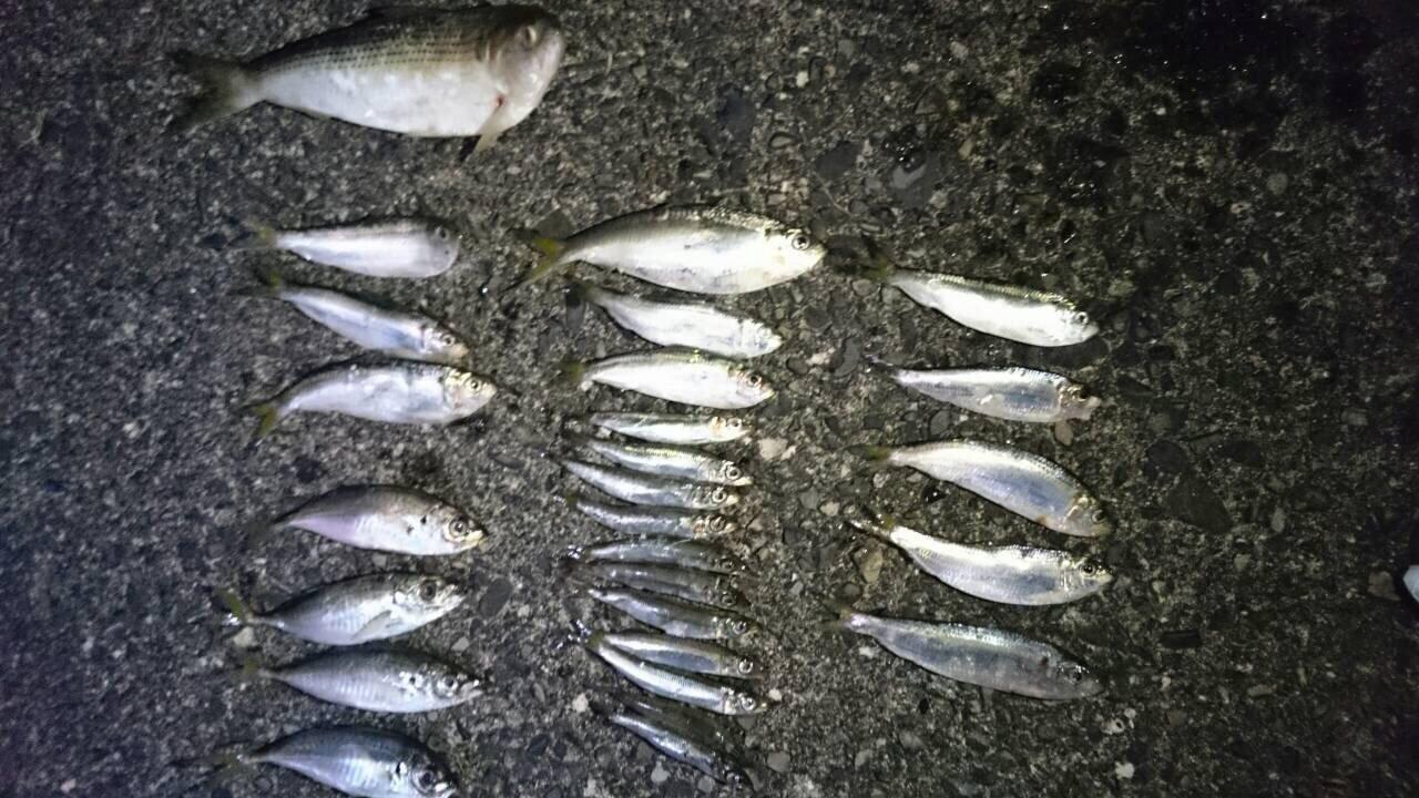 まりこさんの投稿画像,写っている魚はサッパ