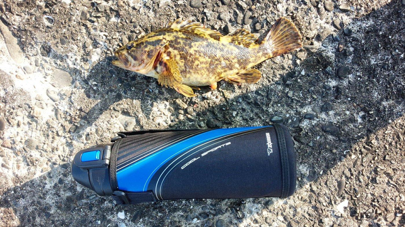 カロルさんの投稿画像,写っている魚はタケノコメバル