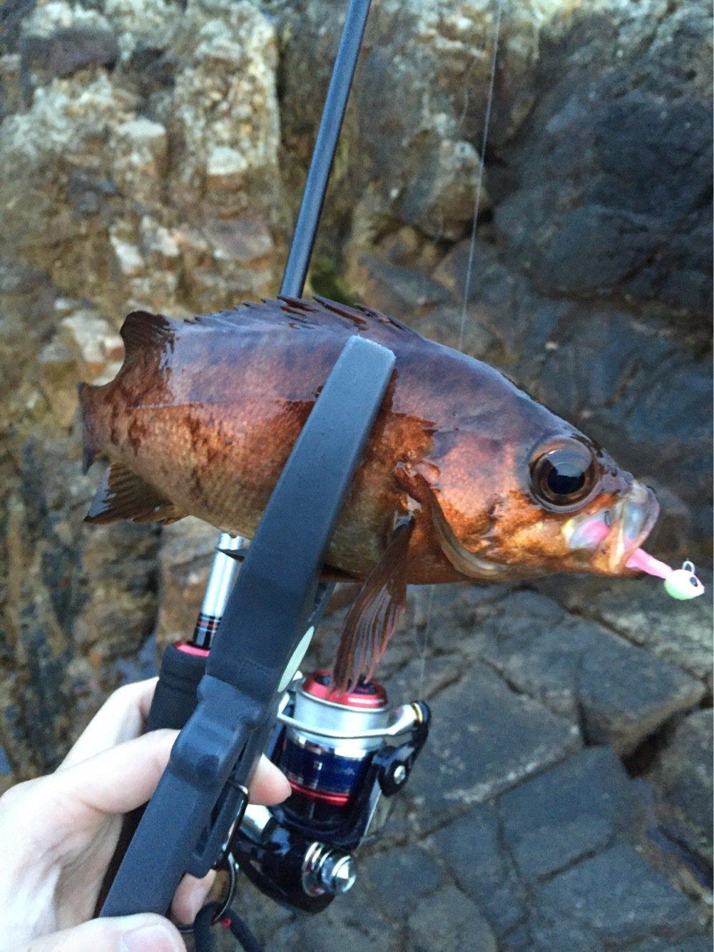 Riccardo さんの投稿画像,写っている魚はメバル