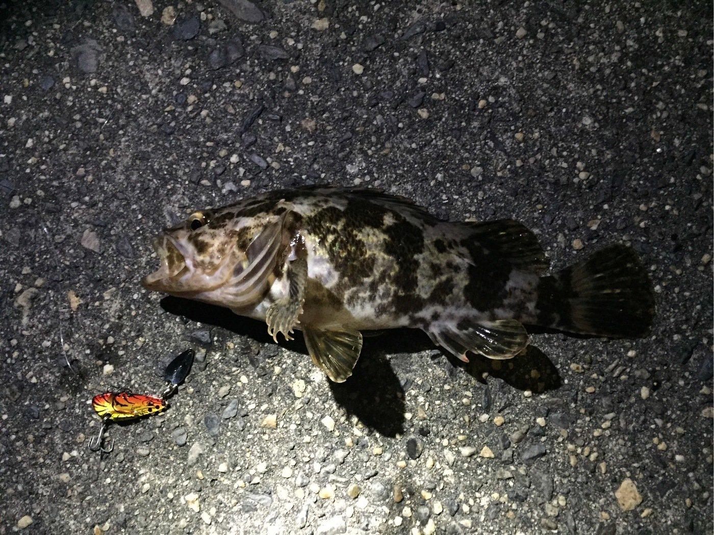 75さんの投稿画像,写っている魚はタケノコメバル