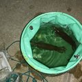 激流マニアさんの岩手県でのヤリイカの釣果写真