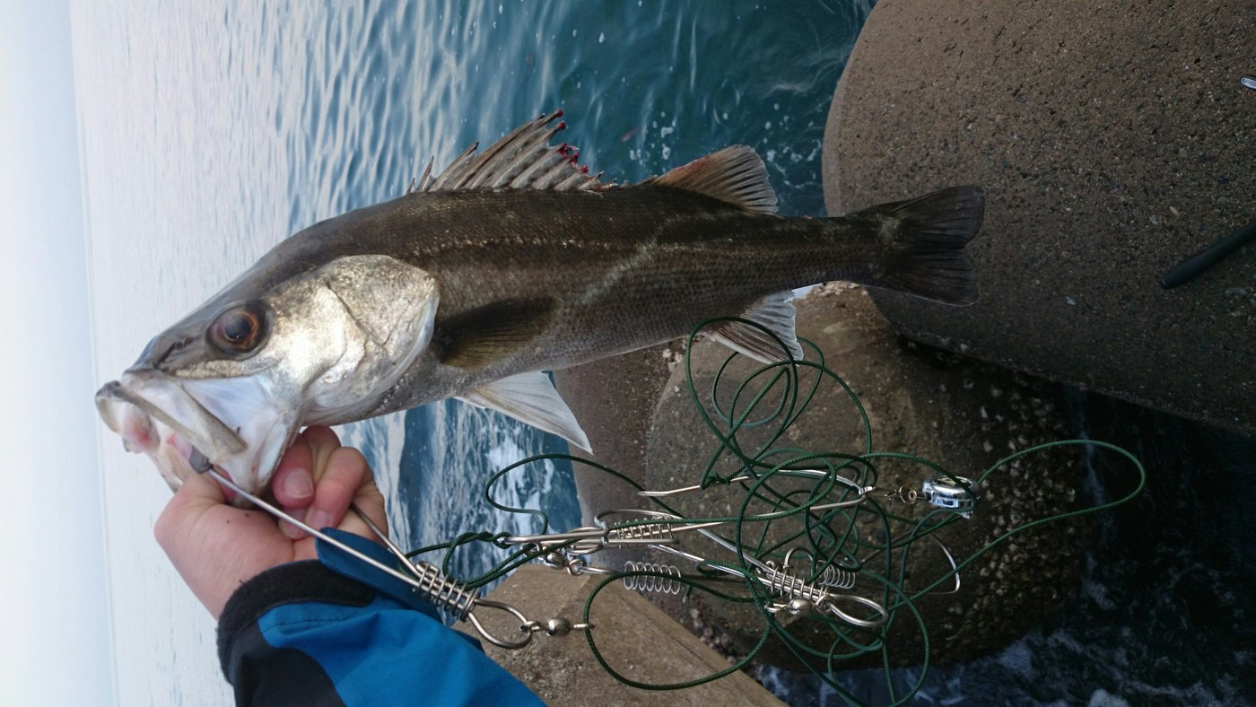 てつをさんの投稿画像,写っている魚はスズキ