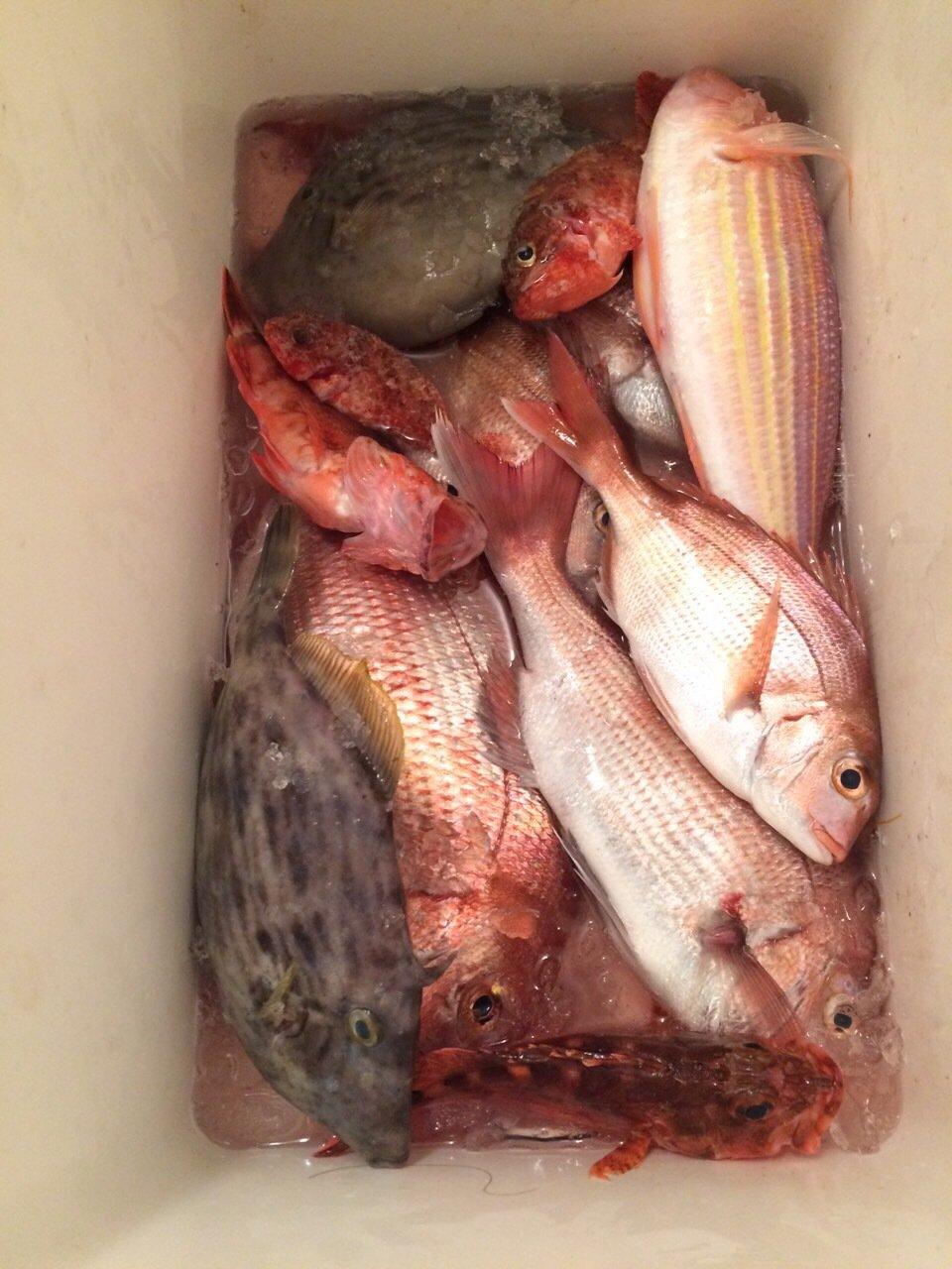 hiroshiさんの投稿画像,写っている魚はマダイ