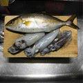 okapi★さんの徳島県鳴門市でのアオリイカの釣果写真