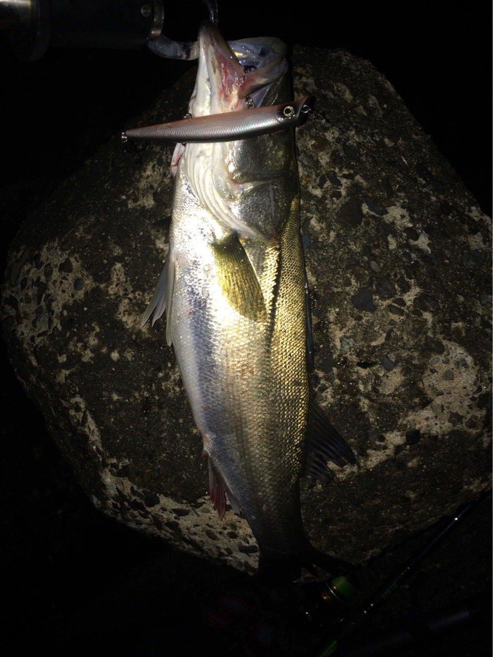ポニーさんの投稿画像,写っている魚はスズキ