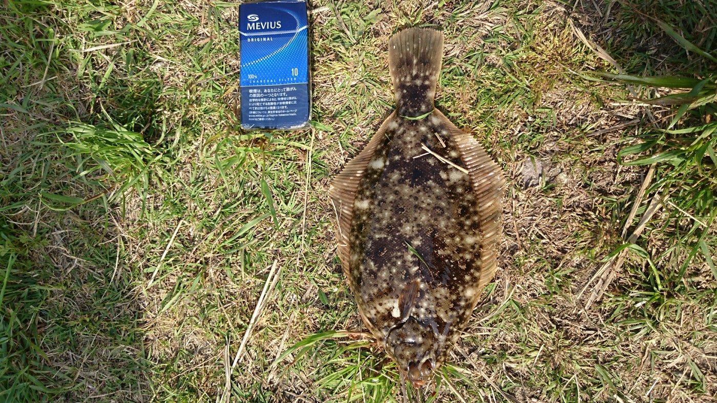 つーさんさんの投稿画像,写っている魚はイシガレイ