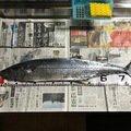 パックロッドさんの岩手県胆沢郡での釣果写真