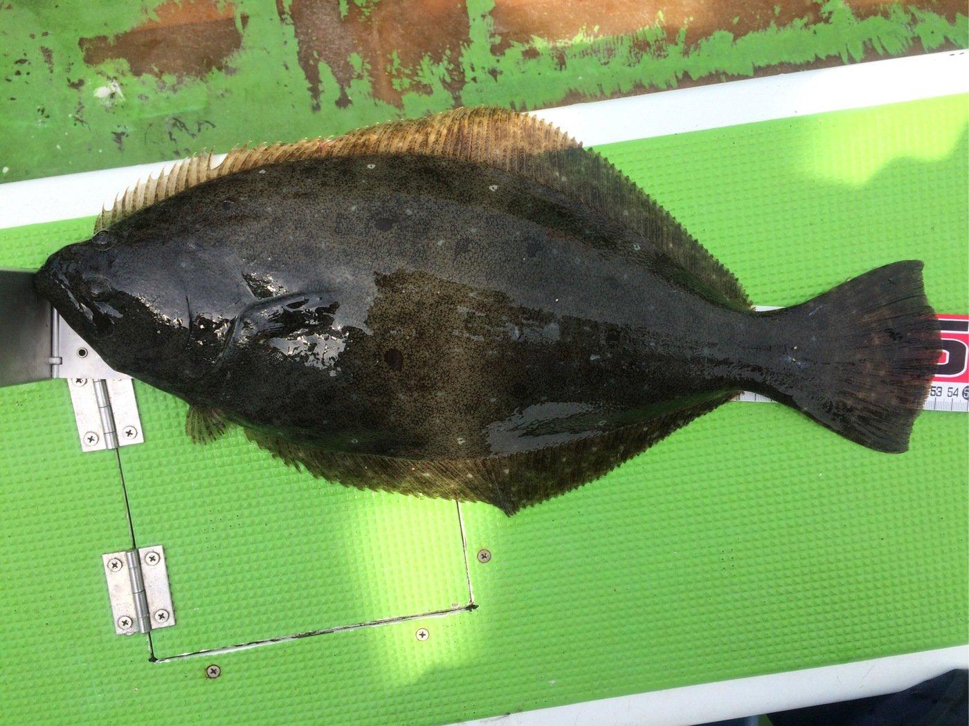 Keikoさんの投稿画像,写っている魚はヒラメ
