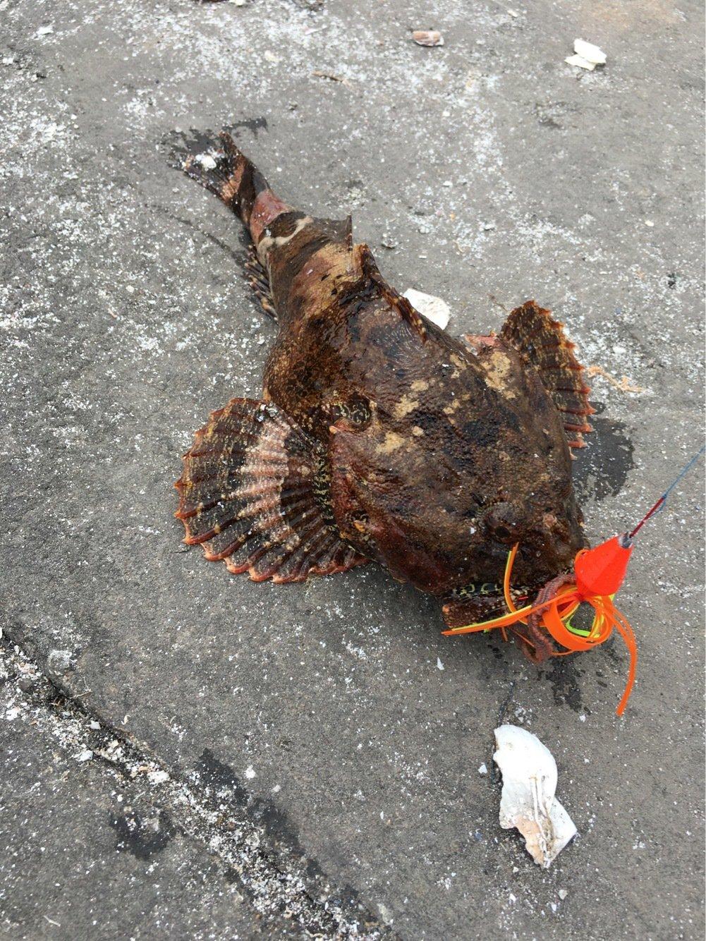 0138STYLEさんの投稿画像,写っている魚はニジカジカ