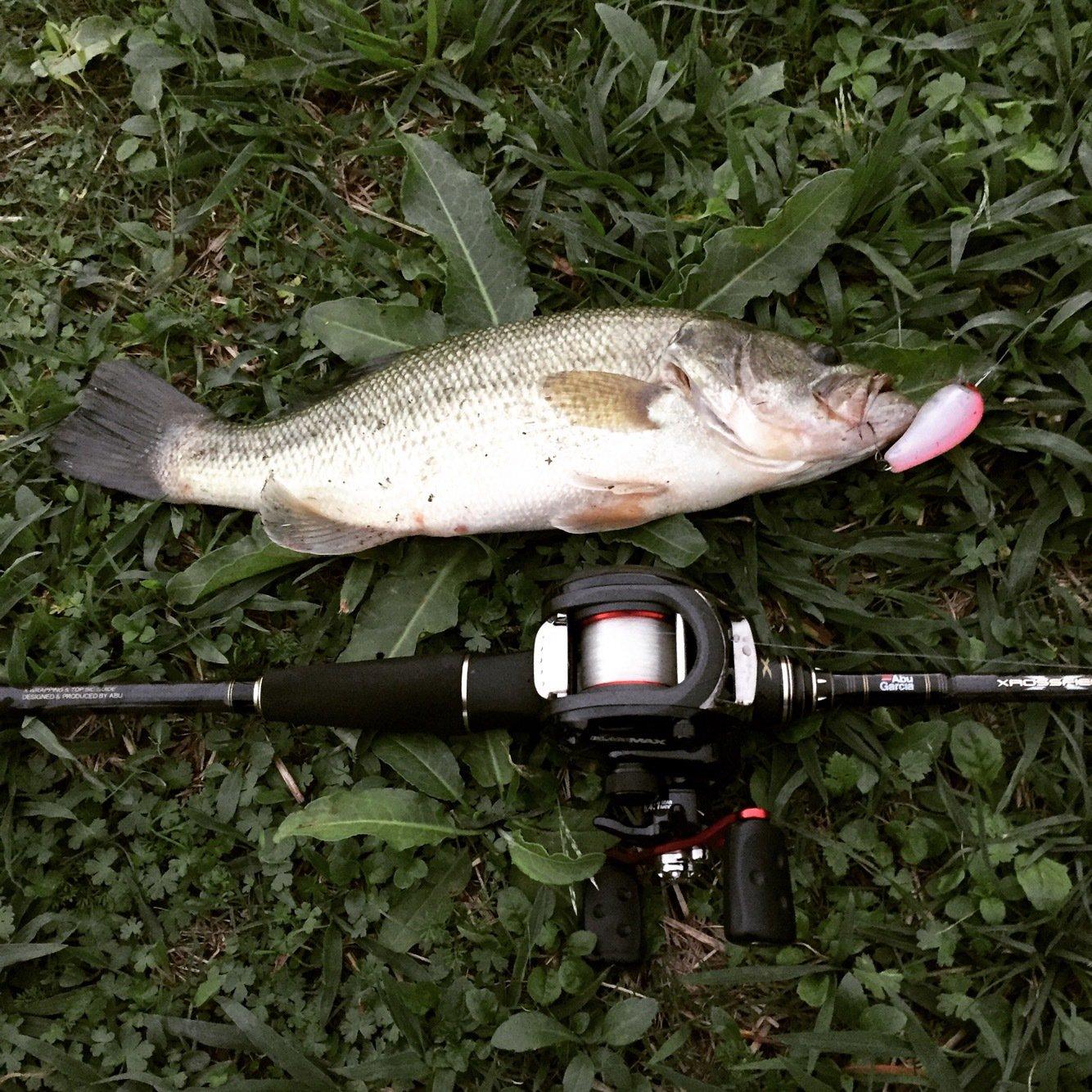 ひさしさんの投稿画像,写っている魚はブラックバス