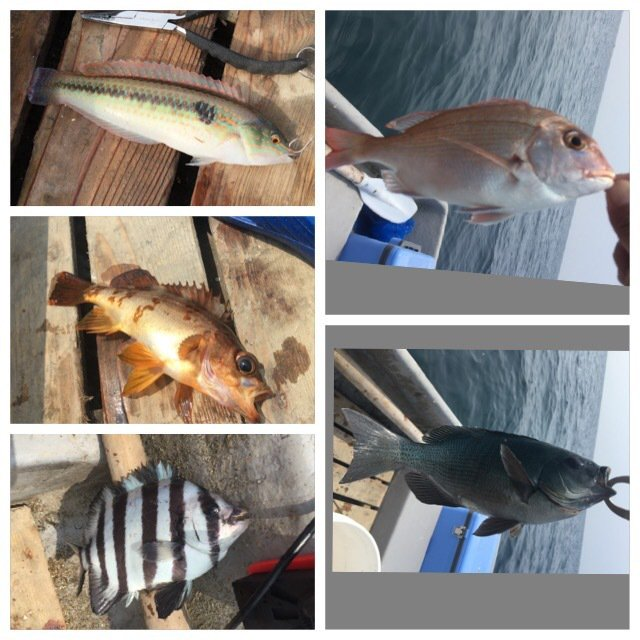 314-KTYMさんの投稿画像,写っている魚は