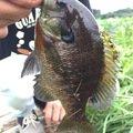 フィネスさんの宮城県登米市での釣果写真
