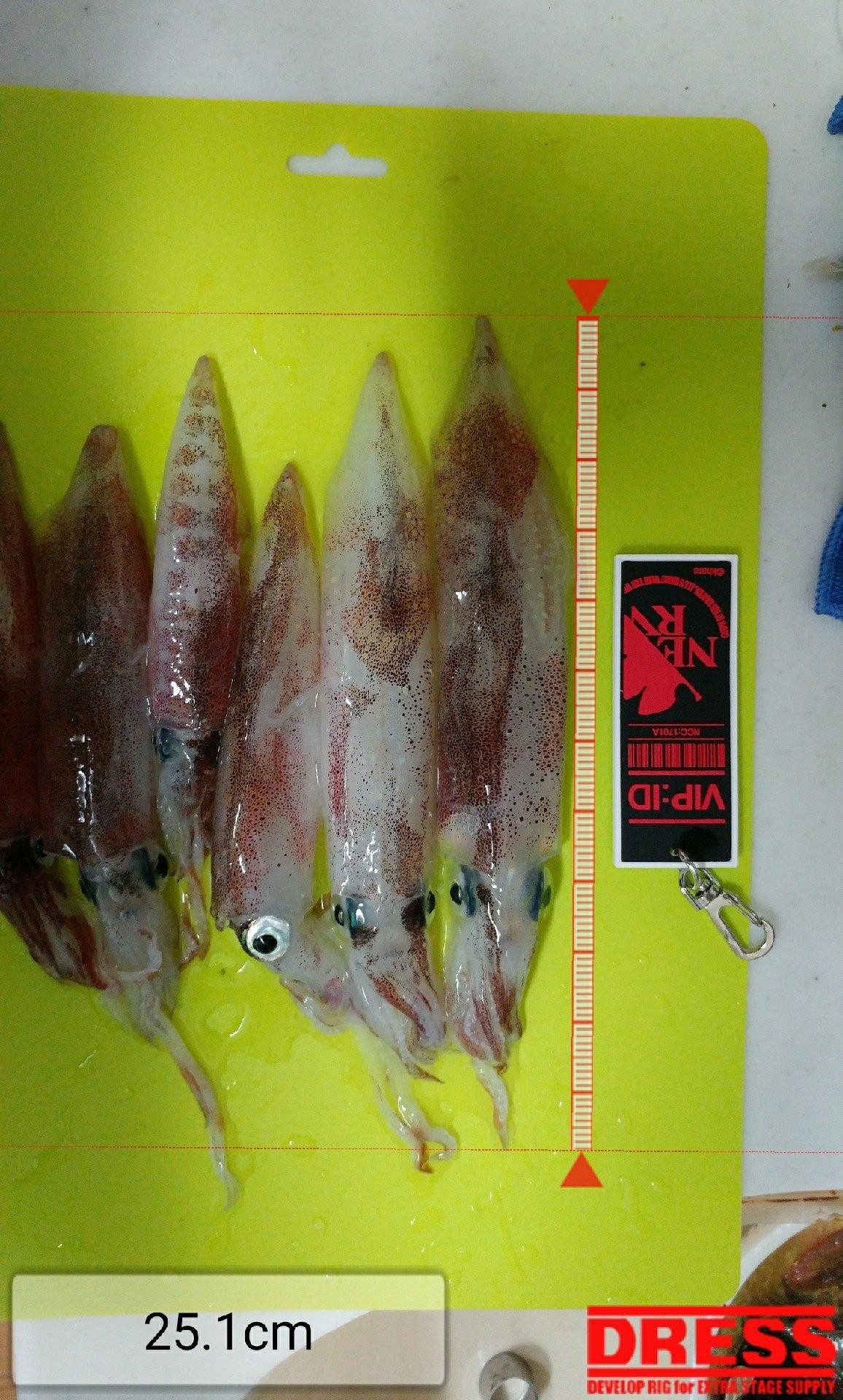 hhnさんの投稿画像,写っている魚はジンドウイカ
