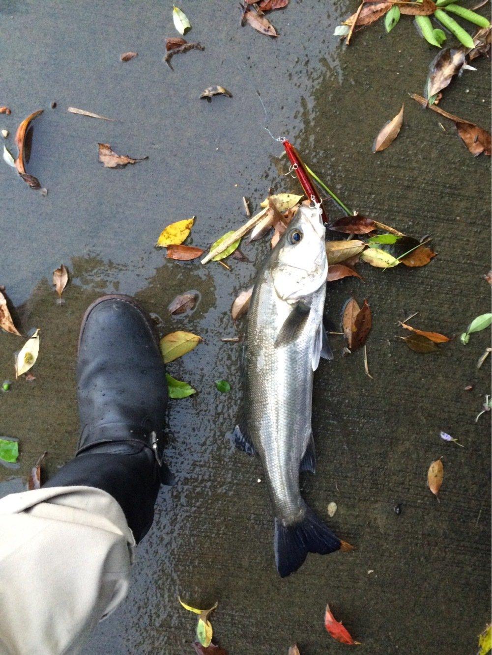 まーつさんの投稿画像,写っている魚は