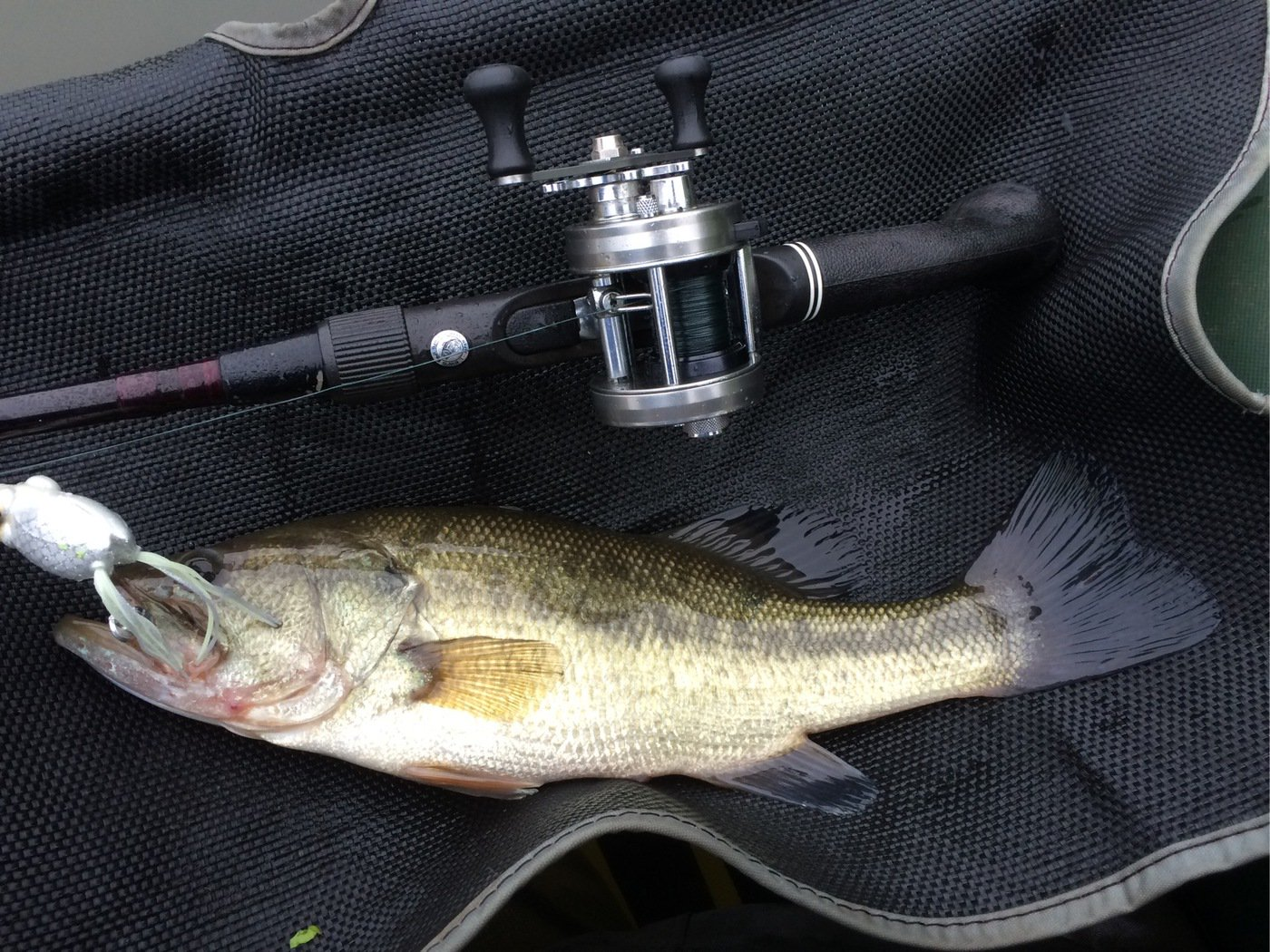 さんぺーさんの投稿画像,写っている魚はニジマス