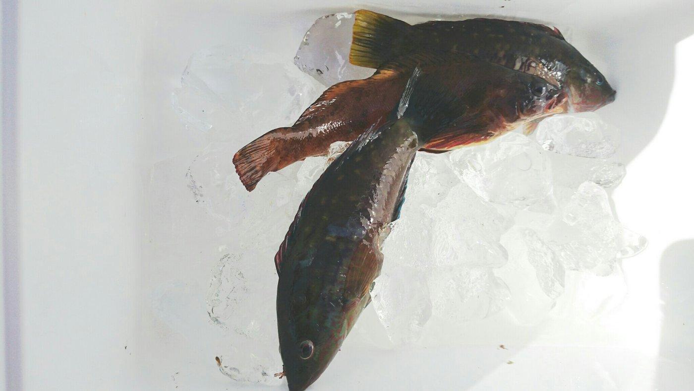 つーさんさんの投稿画像,写っている魚は