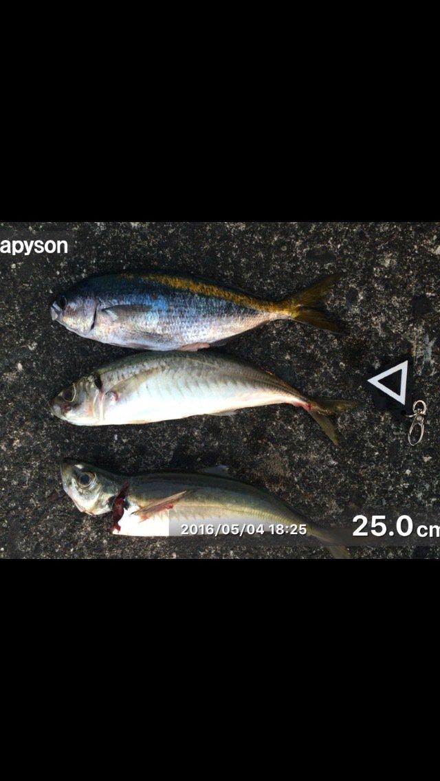 大原聖司さんの投稿画像,写っている魚はアジ