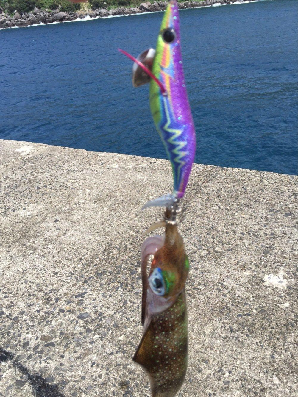 BENさんの投稿画像,写っている魚は