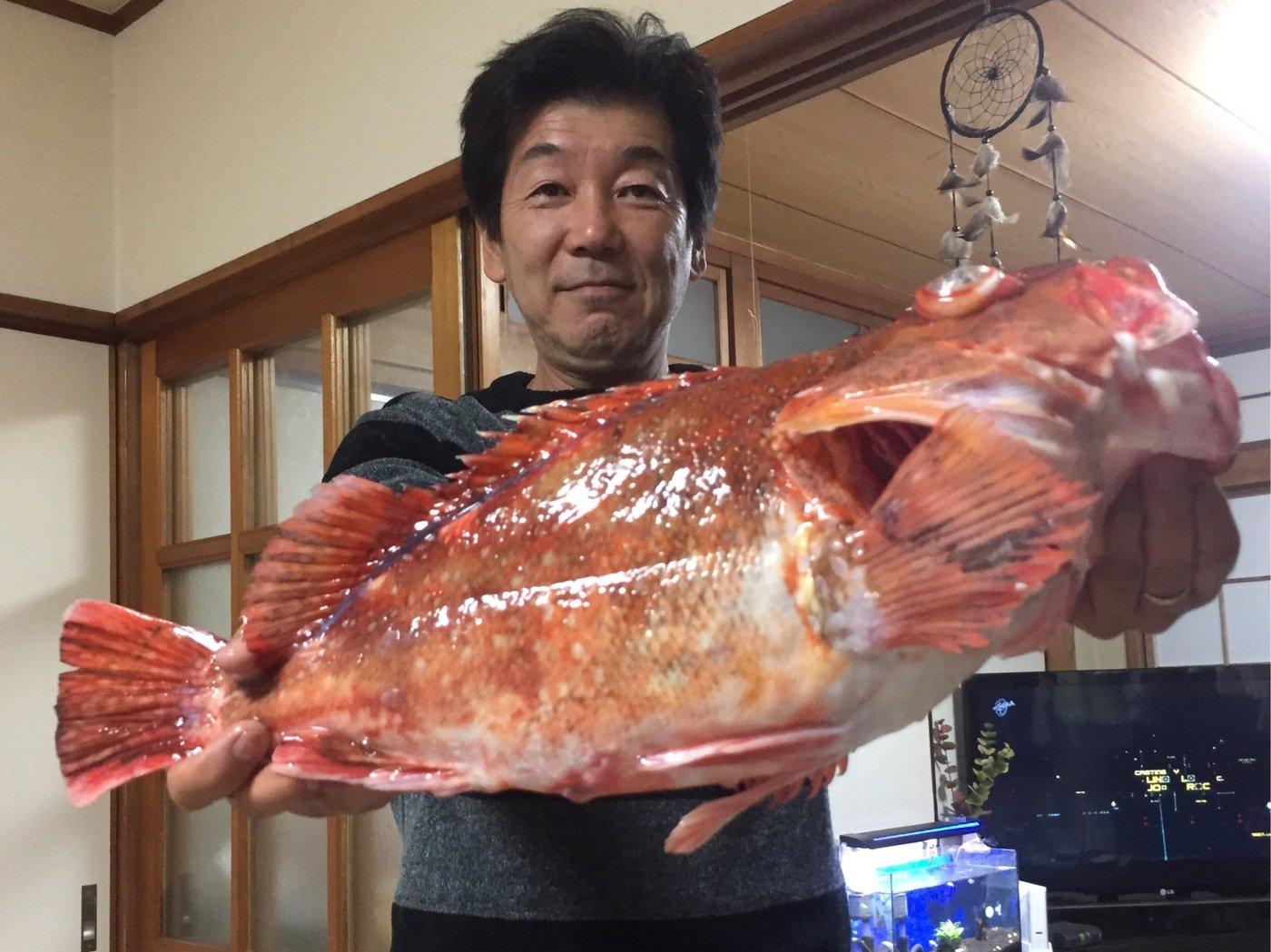 Yuji Pogiさんの投稿画像,写っている魚はガンコ