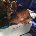 まつさんの千葉県富里市での釣果写真