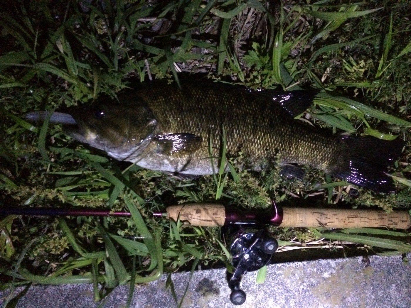 fc0825さんの投稿画像,写っている魚はスモールマウスバス