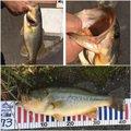パーマンさんの香川県善通寺市での釣果写真