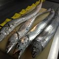 小春ちゃんさんの埼玉県さいたま市での釣果写真