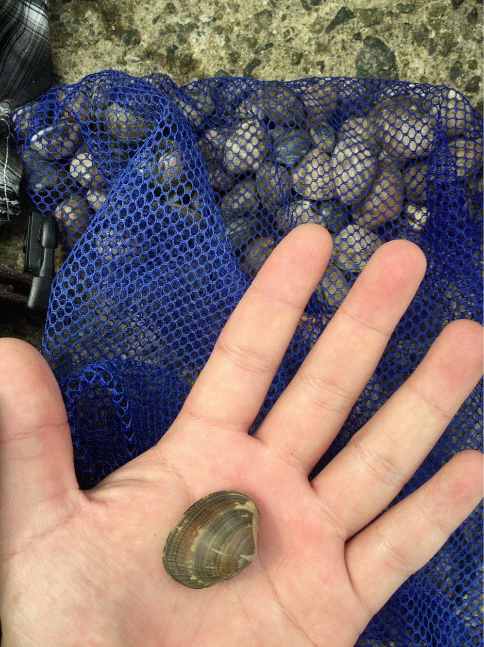 AritAさんの投稿画像,写っている魚は