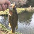 きのまーさんの茨城県小美玉市での釣果写真