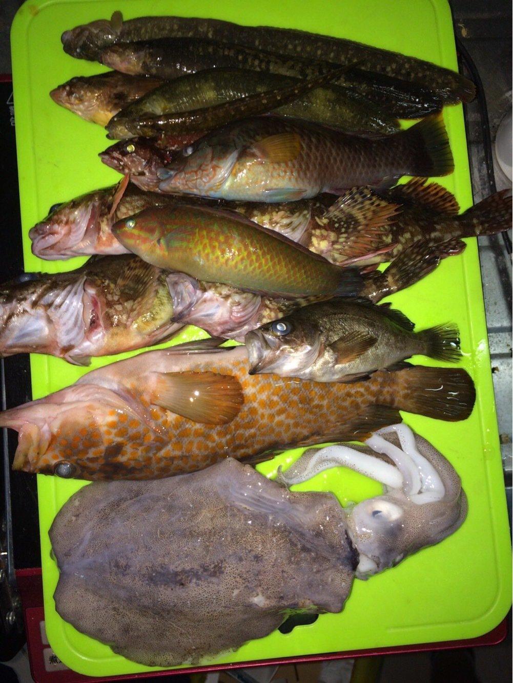 りょーすけさんの投稿画像,写っている魚はアオリイカ