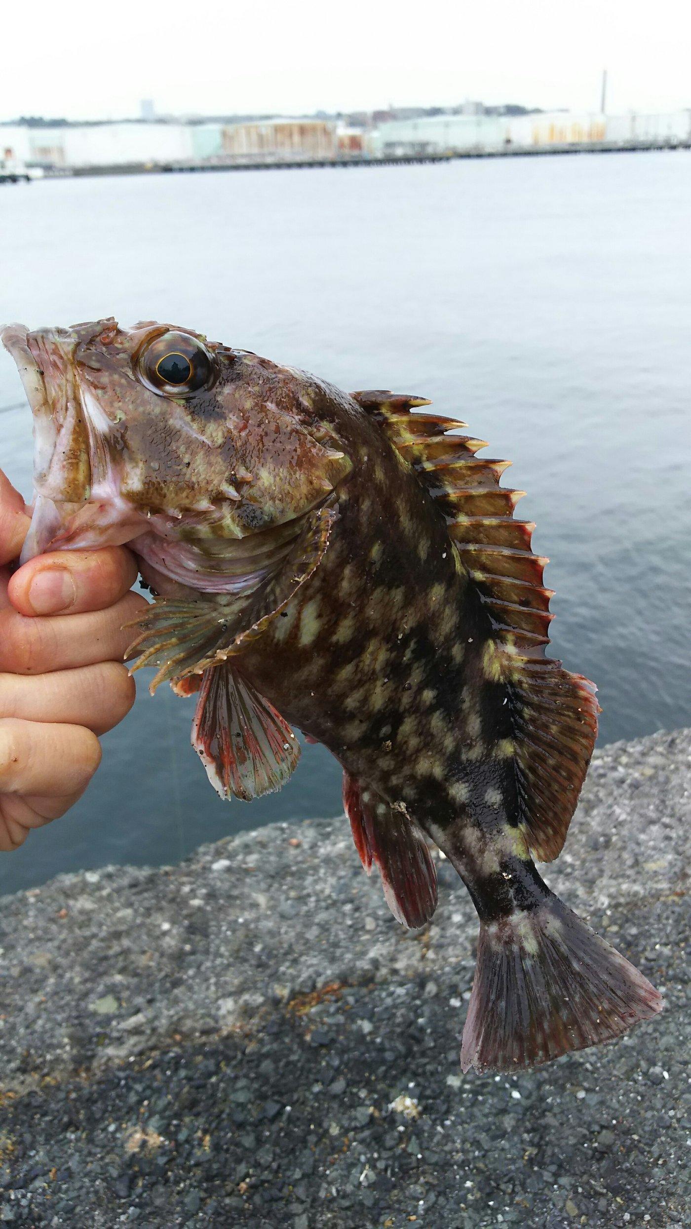 りょうさんの投稿画像,写っている魚は