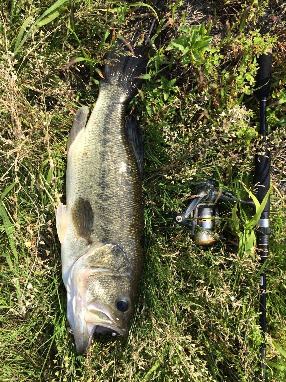 いーさんの投稿画像,写っている魚はブラックバス