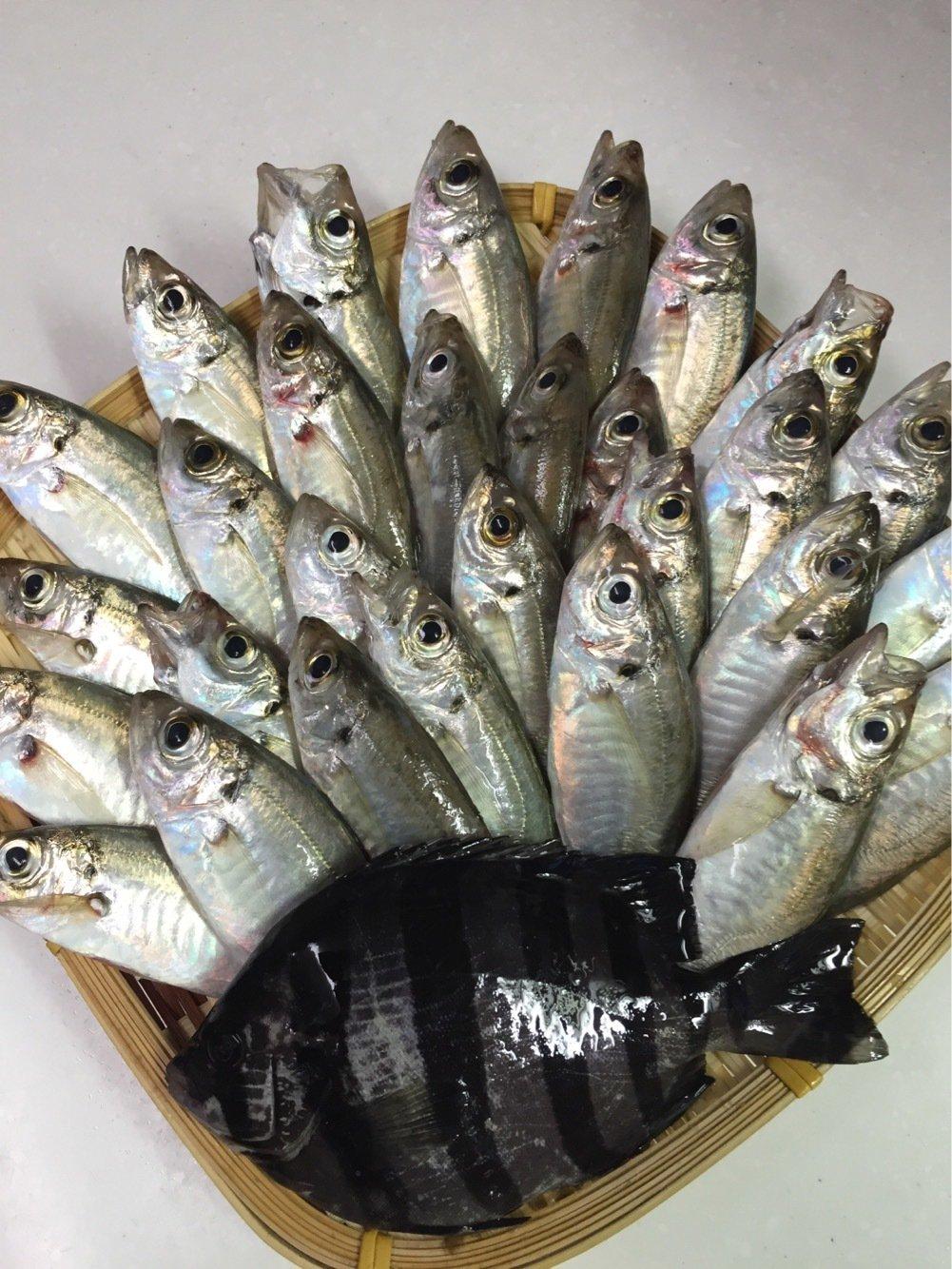 シンさんの投稿画像,写っている魚はアジ