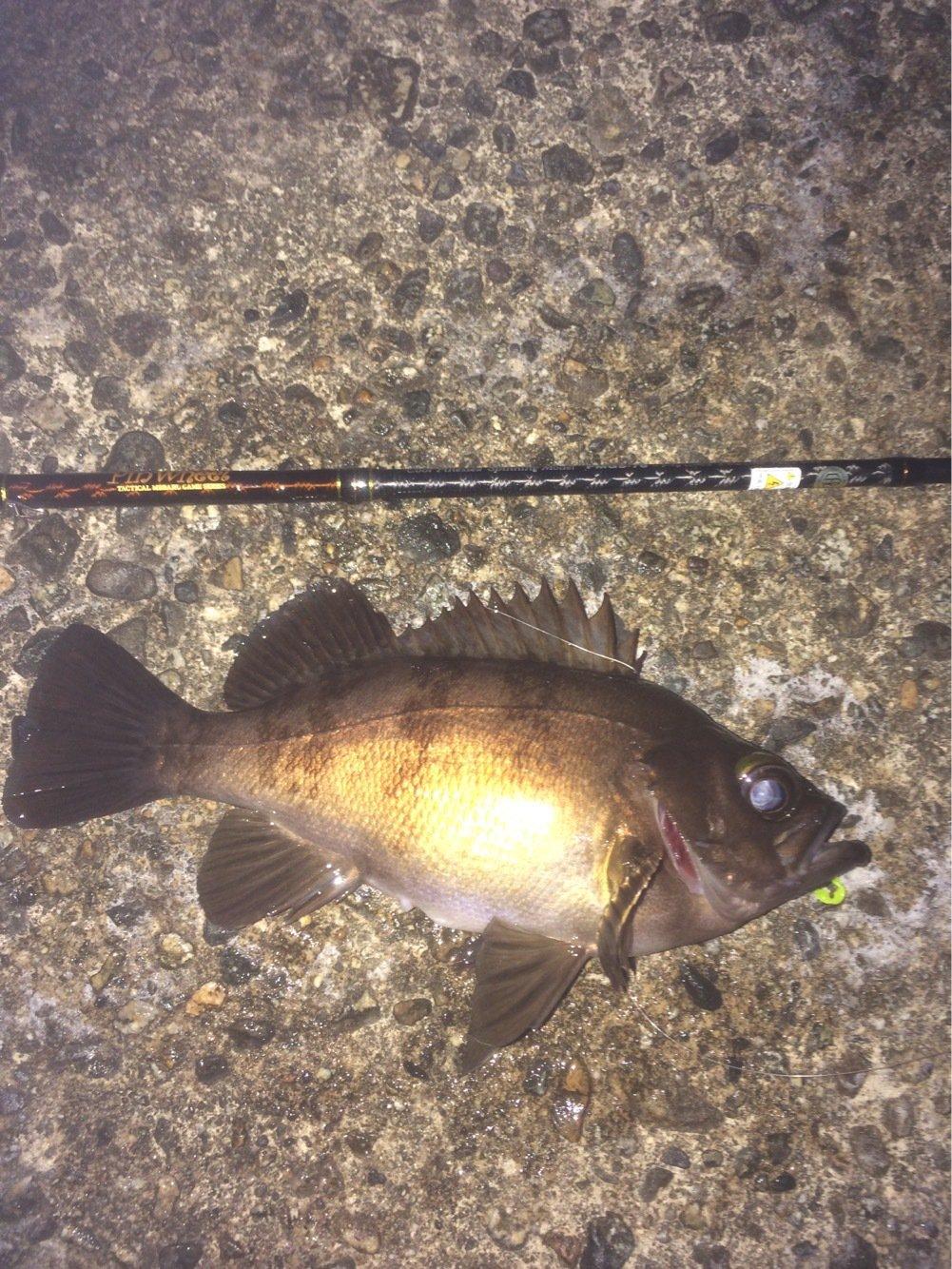 マルコムさんの投稿画像,写っている魚はメバル