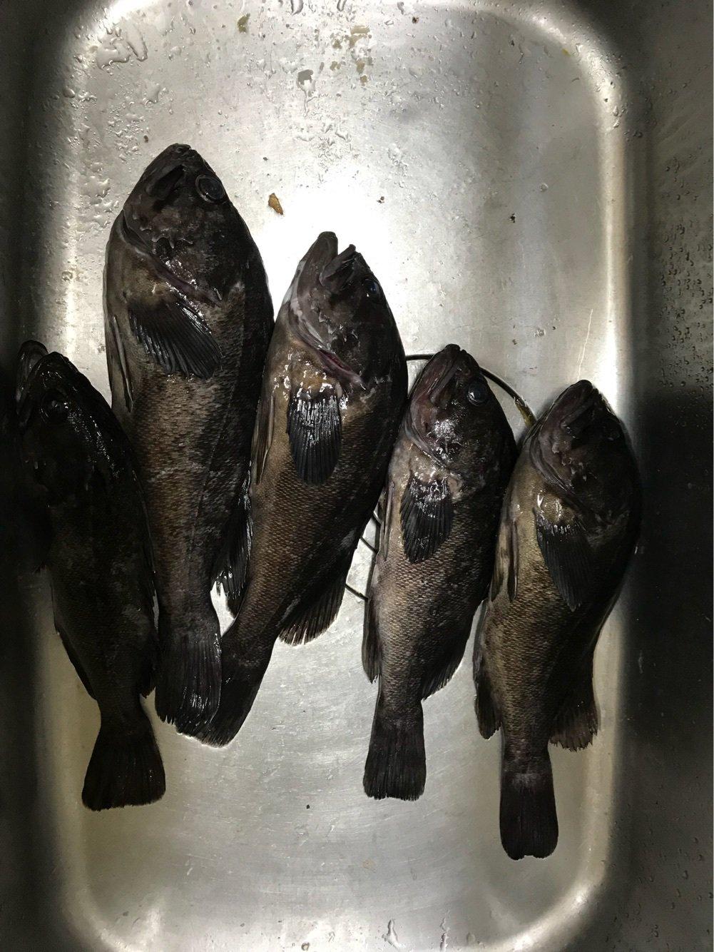 ゆうちゃんさんの投稿画像,写っている魚はソイ