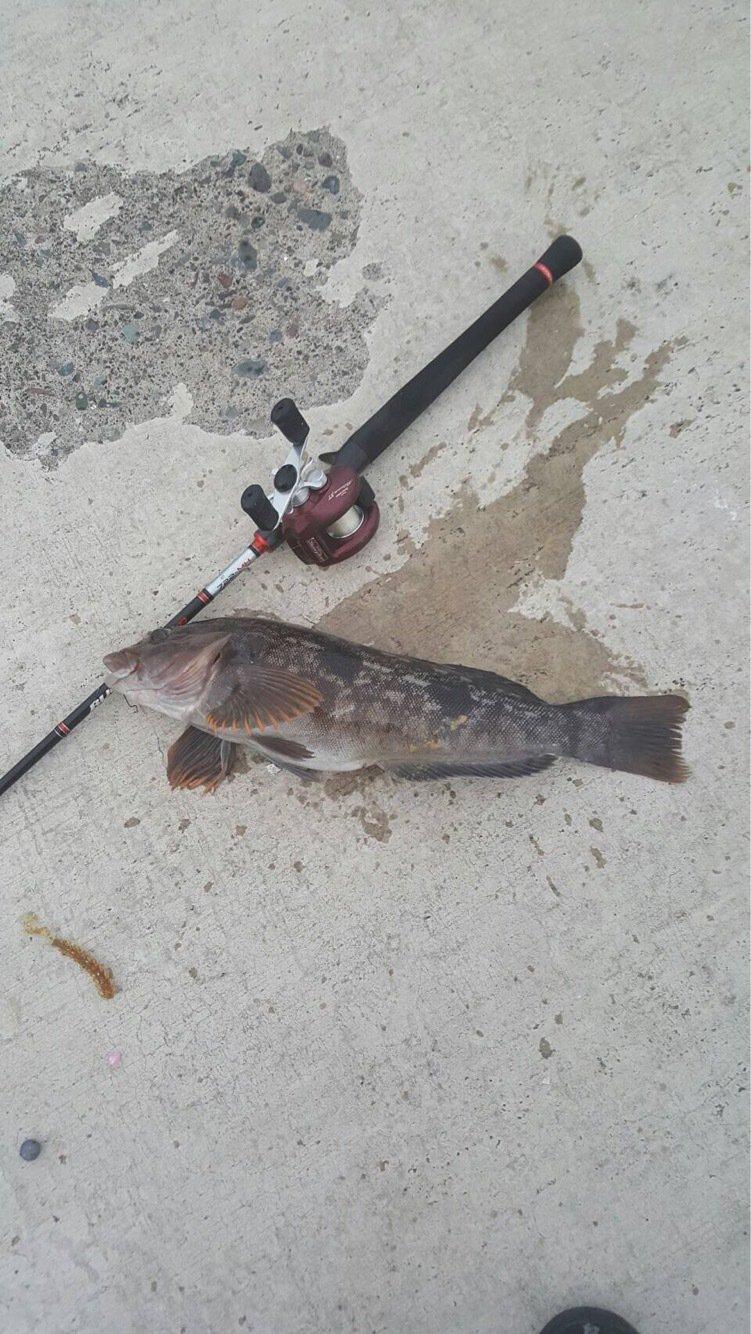 爆笑釣り部さんの投稿画像,写っている魚はアイナメ