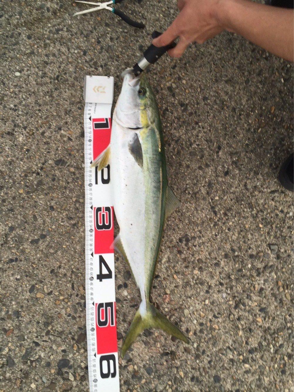 木村 駿斗さんの投稿画像,写っている魚はワラサ