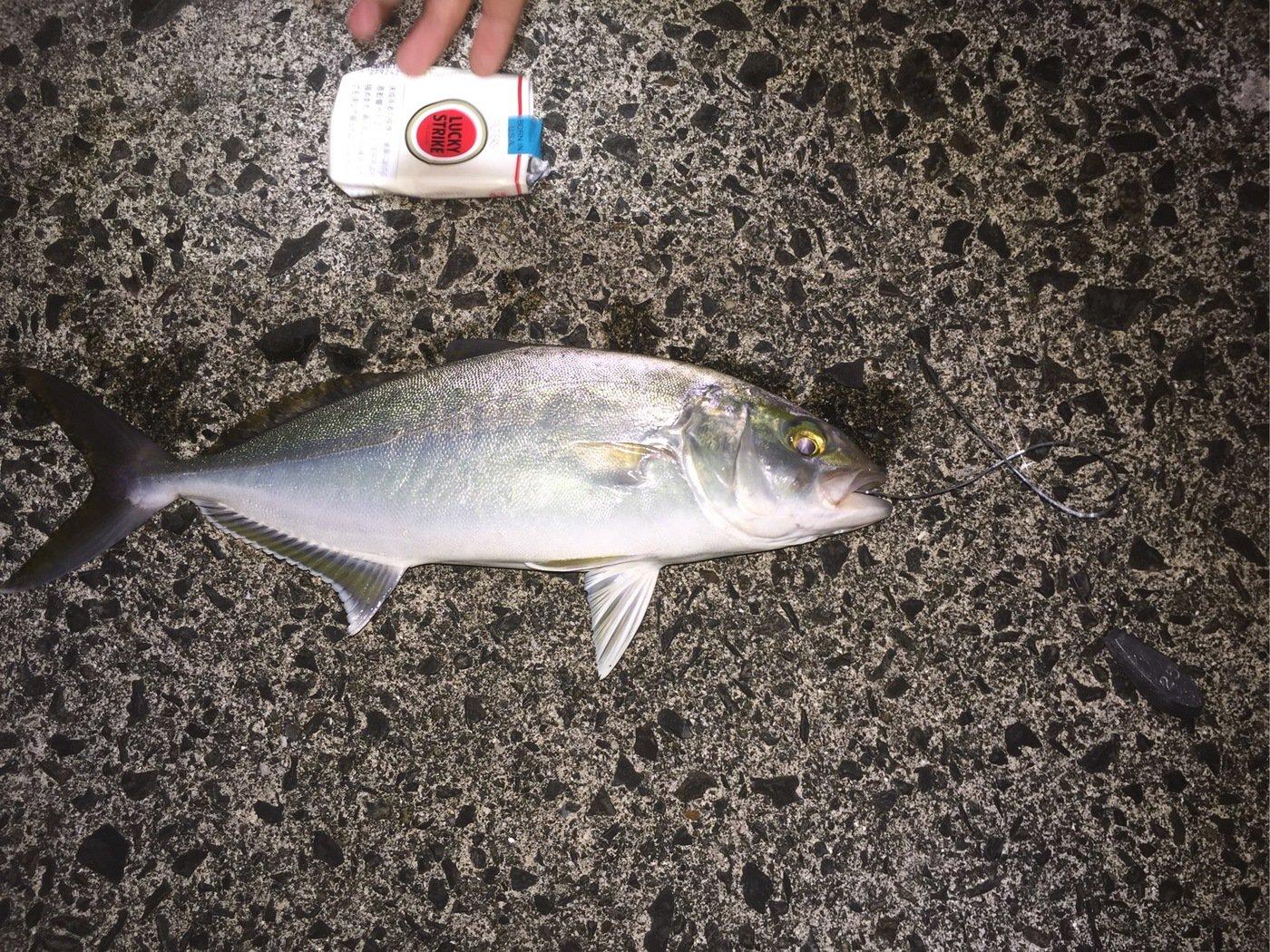 たーしさんの投稿画像,写っている魚はカンパチ