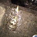 ひかるさんの徳島県鳴門市でのアオリイカの釣果写真