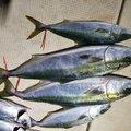 ヒデポンさんの大阪府寝屋川市での釣果写真