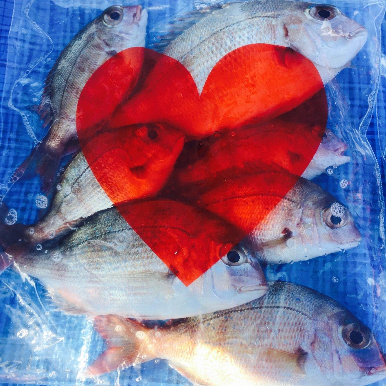 momoさんの投稿画像,写っている魚はマダイ