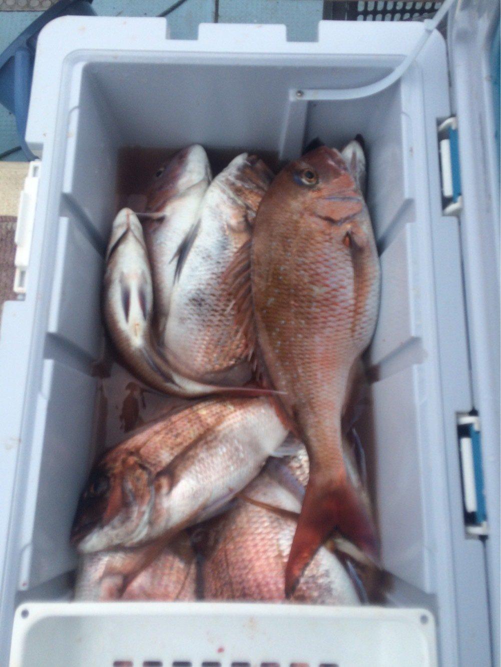 ヒロシさんの投稿画像,写っている魚はマダイ
