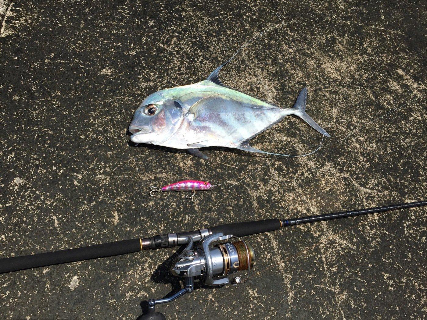 ヨウスケさんの投稿画像,写っている魚はイトヒキアジ