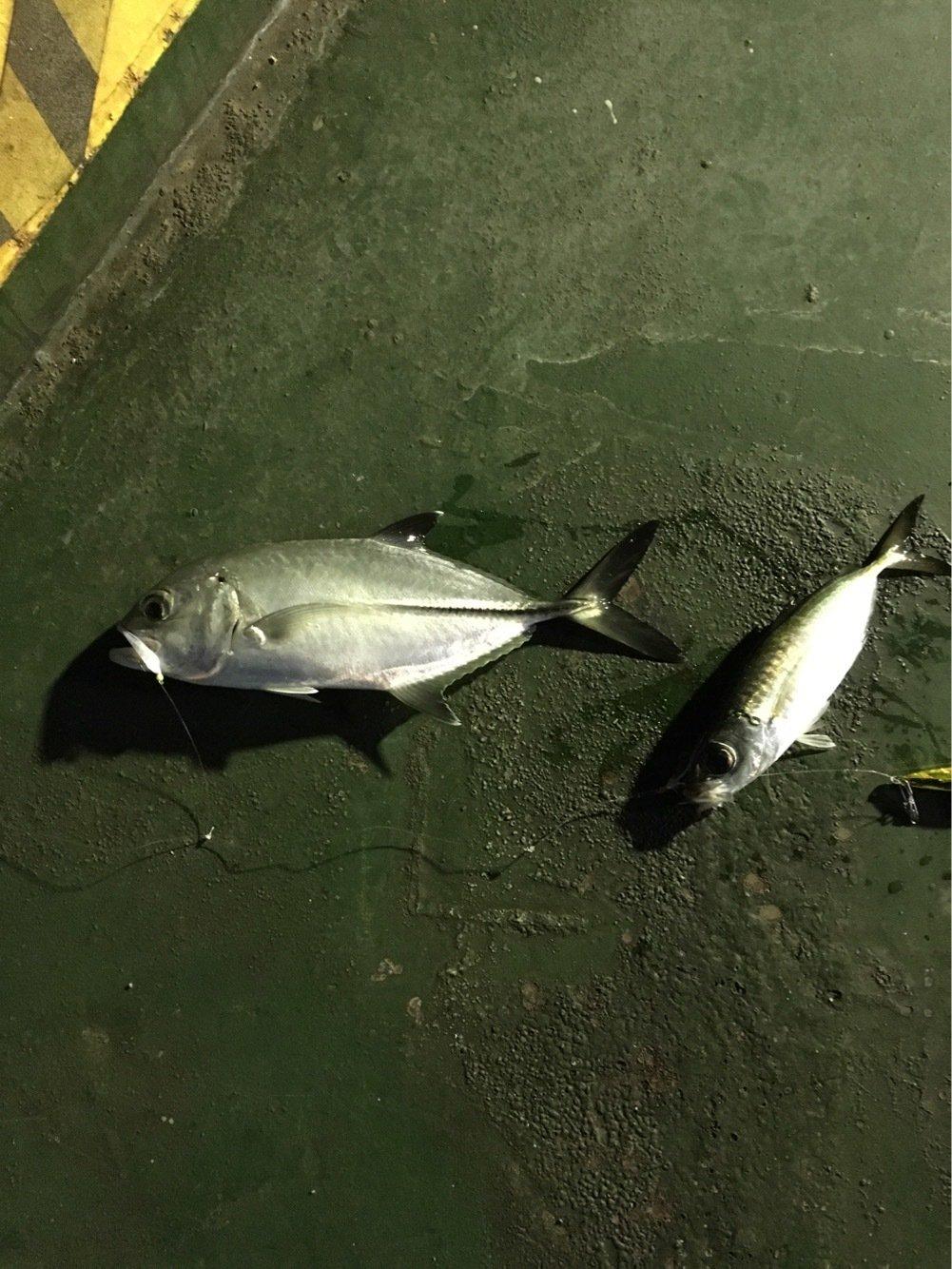 Kennyさんの投稿画像,写っている魚はメアジ