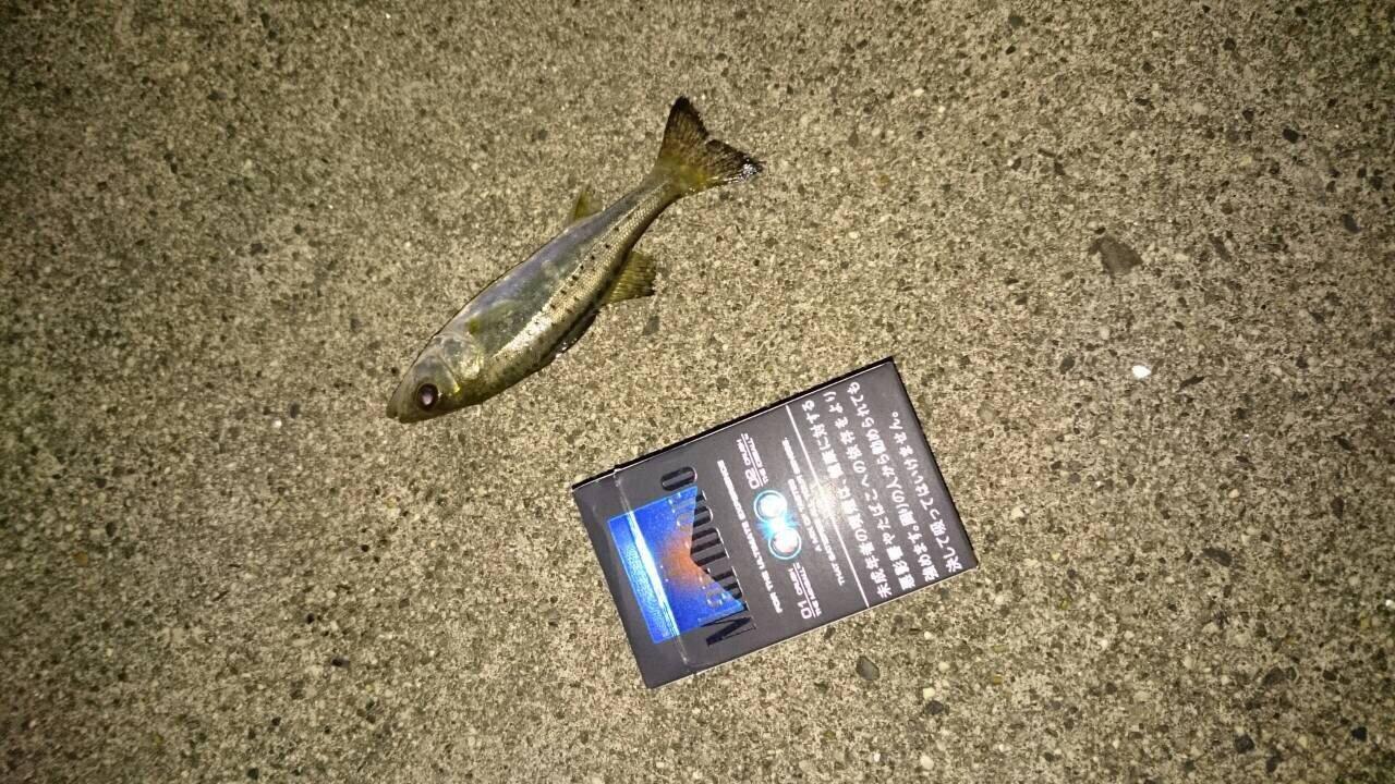 まりこさんの投稿画像,写っている魚はスズキ