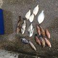 Macさんの大分県宇佐市での釣果写真